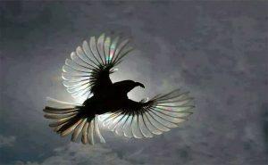Wings of Change!